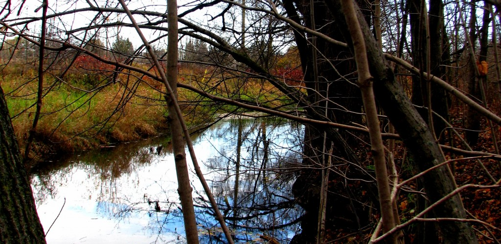 the creek through the woods with colour changing leaves