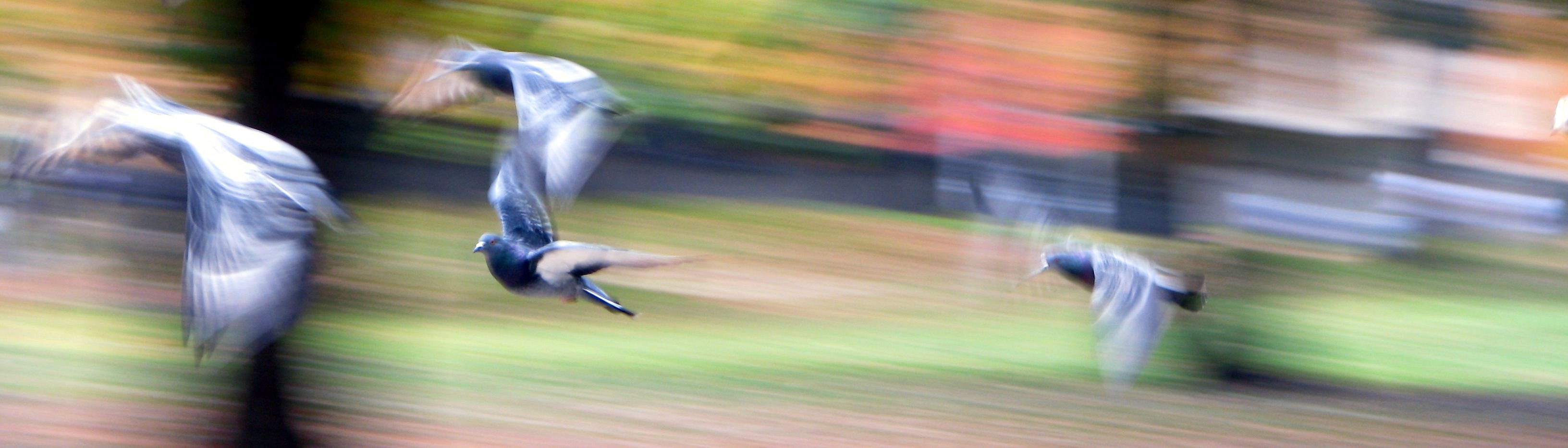 startled birds take flight in autumn
