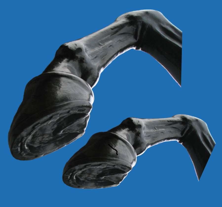 Two images of the sculpted horse's foot at different angles and sizes